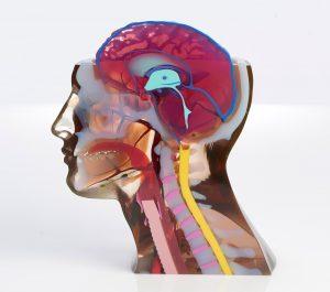 3D-Druck eines Kopfmodells mit der Stratasys J750